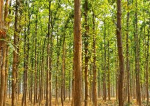 subtropical-forest-india-1